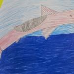 Fish Drawing / Grade 5